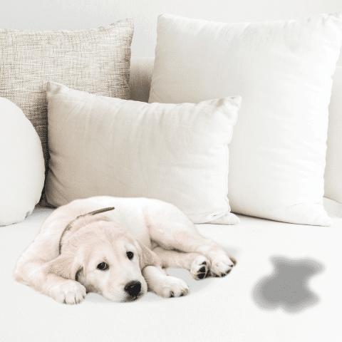 Desodorização de sofá